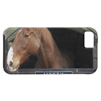 Horse standing looking out of its stable iPhone 5 covers