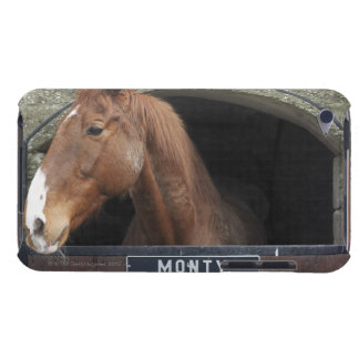 Horse standing looking out of its stable iPod touch cases