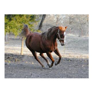 Horse star Card