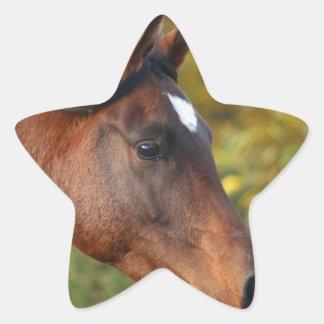 Horse Star Sticker