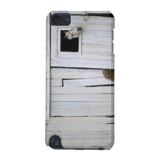 Horse Sticking Head out Barn Window iPod Touch (5th Generation) Covers