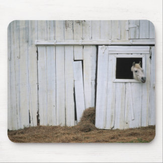 Horse Sticking Head out Barn Window Mouse Mat