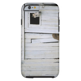 Horse Sticking Head out Barn Window Tough iPhone 6 Case
