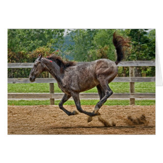 Horse Tennessee Walker Filly Card