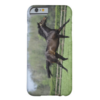 Horse Thoroughbreds, Wassl 1988, Barely There iPhone 6 Case