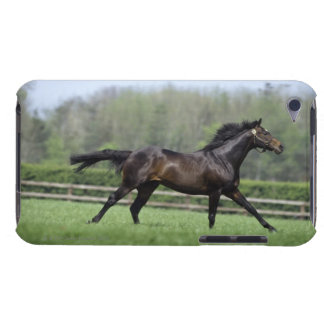 Horse Thoroughbreds, Wassl 1988, iPod Case-Mate Case
