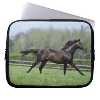 Horse Thoroughbreds, Wassl 1988, Laptop Sleeve