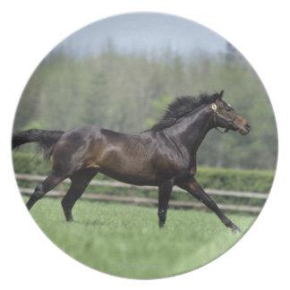 Horse Thoroughbreds, Wassl 1988, Plate