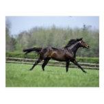 Horse Thoroughbreds, Wassl 1988, Post Card