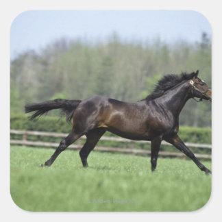 Horse Thoroughbreds, Wassl 1988, Square Sticker