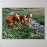 Horse Trio Print