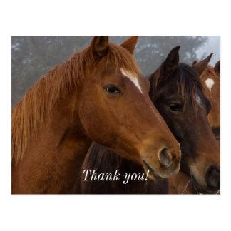 Horse Triplets Postcard