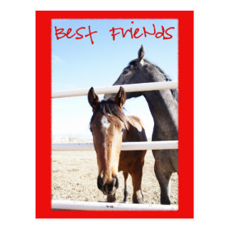 Horse Valentin IV Postcard