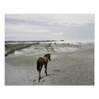 Horse walking on the beach poster