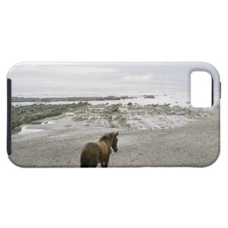 Horse walking on the beach tough iPhone 5 case