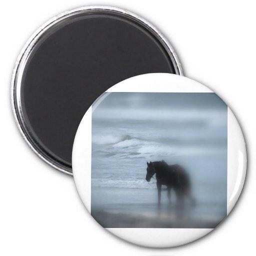 Horse walking the beach Newport Rhode Island Magnet