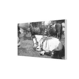 Horse Wall Art Black and White Photobomber