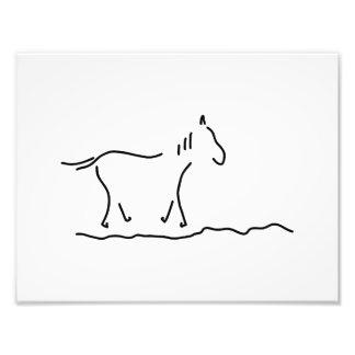 horse wild horse ride photograph