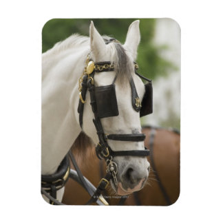 Horse with blinders rectangular photo magnet