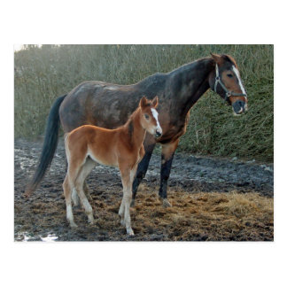 Horse with foal postcard