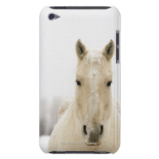 Horse with snow on head iPod Case-Mate case