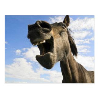 horse yawning post cards