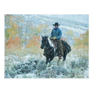 Horseback rider 19 postcard