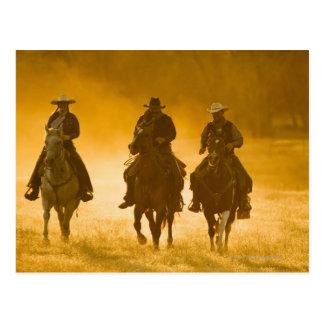 Horseback riders 4 postcard