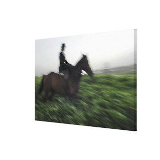 Horseback riding in green field. Woman horseback Canvas Print
