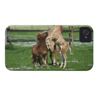 Horses 3 iPhone 4 Case-Mate case