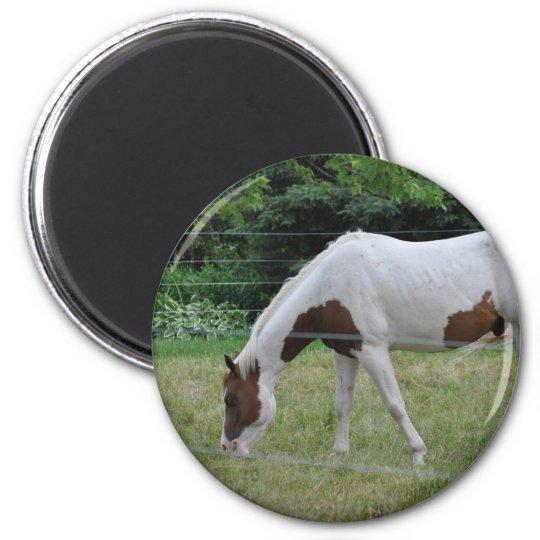 Horses 6 Cm Round Magnet
