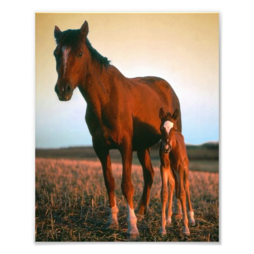 Horses, a Mare and Colt Photo Print