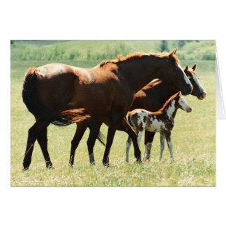Horses and Foal Picture Card
