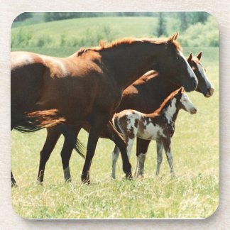 Horses and Foal Picture Coasters
