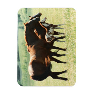 Horses and Foal Picture Rectangular Photo Magnet