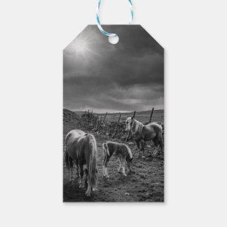 Horses and Pony Gift Tag