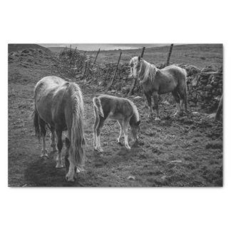 Horses and Pony Tissue Paper