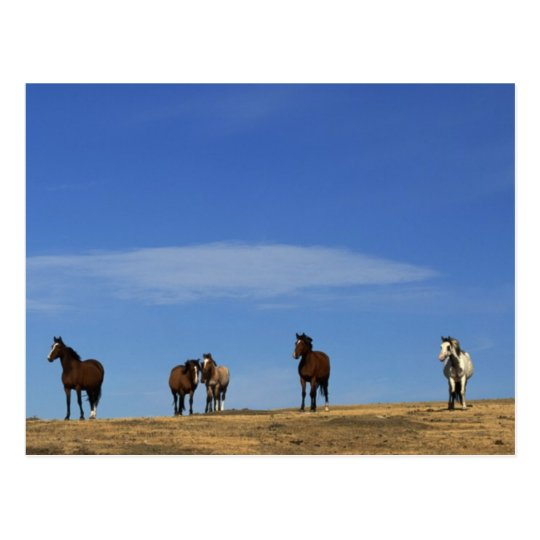 Horses and Sky Postcard