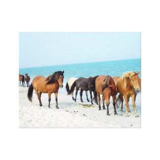 Horses Assateague National Sea Shore Maryland Canvas Print