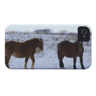 Horses at Cape Kiritappu, Hokkaido Prefecture, iPhone 4 Case