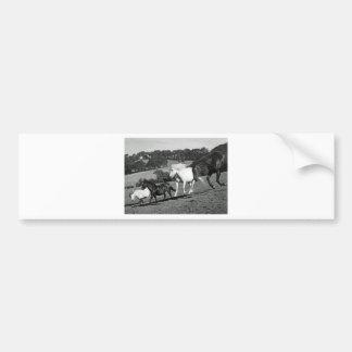 Horses At Play Bumper Sticker