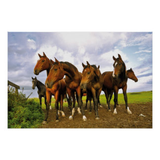 Horses at the field poster