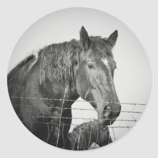 Horses Behind the Fence in Black and White Round Sticker
