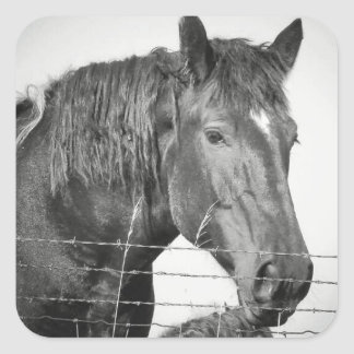 Horses Behind the Fence in Black and White Square Sticker