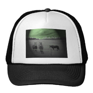 Horses black and white with green hat