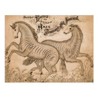 Horses By Penmanship Postcards