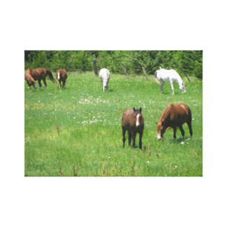horses canvas