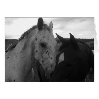 Horses - Colorado Beauties Card