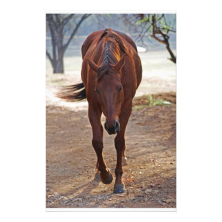Horses coming home stationery