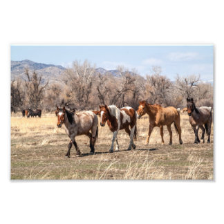 Horses Coming In from Pasture Art Photo